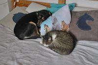 Czytaj więcej: Jak pies z kotem ;) Z kotami znaczy się ;)