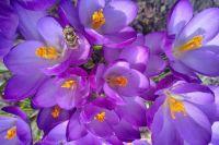 Czytaj więcej: Powitanie Wiosny!