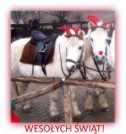Czytaj więcej: Wesołych Świąt! I Mikołajkowa relacja :)